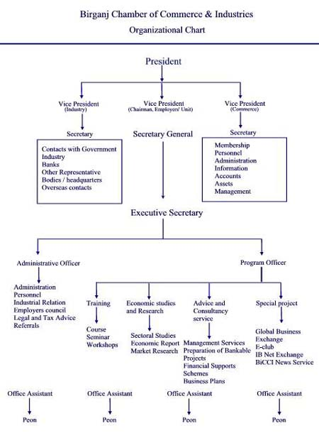Organizational Structure of BiCCI
